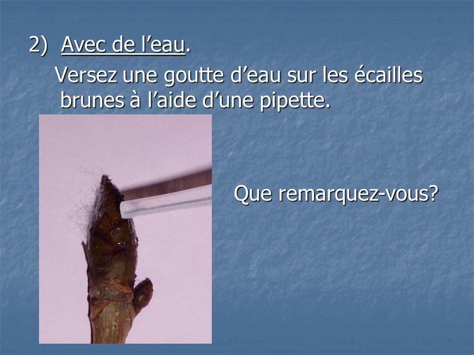2) Avec de leau. Versez une goutte deau sur les écailles brunes à laide dune pipette. Versez une goutte deau sur les écailles brunes à laide dune pipe