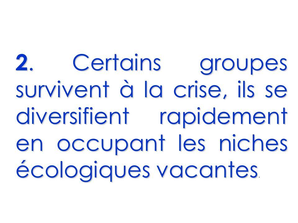 2. Certains groupes survivent à la crise, ils se diversifient rapidement en occupant les niches écologiques vacantes 2. Certains groupes survivent à l