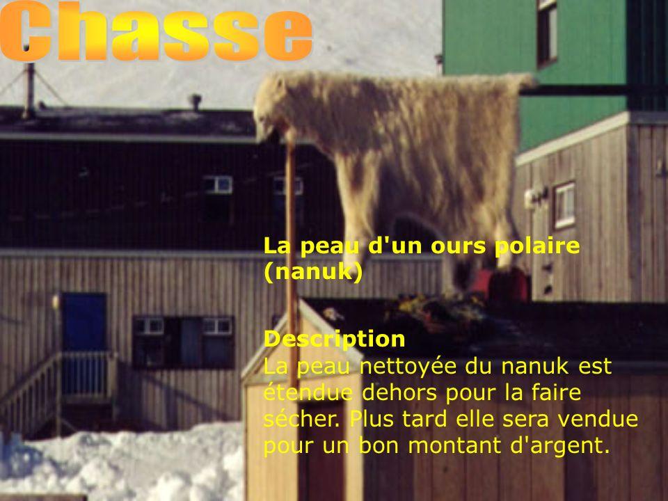 La peau d un ours polaire (nanuk) Description La peau nettoyée du nanuk est étendue dehors pour la faire sécher.