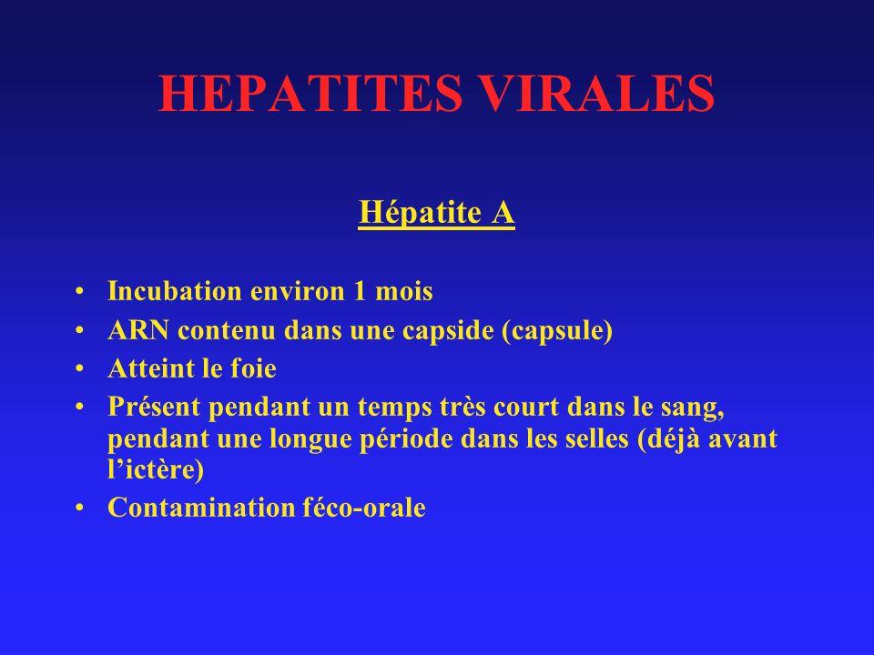 HEPATITES VIRALES Hépatite A Incubation environ 1 mois ARN contenu dans une capside (capsule) Atteint le foie Présent pendant un temps très court dans le sang, pendant une longue période dans les selles (déjà avant lictère) Contamination féco-orale