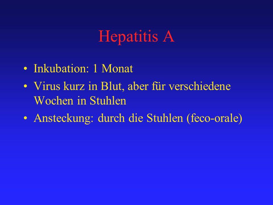 Hepatitis A Inkubation: 1 Monat Virus kurz in Blut, aber für verschiedene Wochen in Stuhlen Ansteckung: durch die Stuhlen (feco-orale)