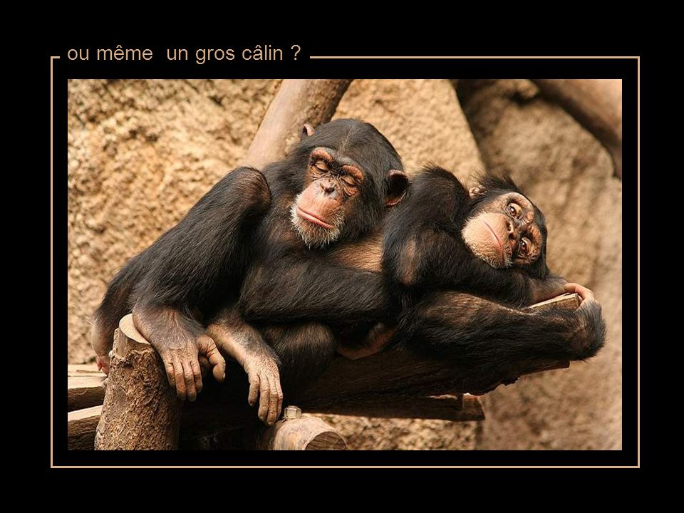 ou de faire un petit calin ?