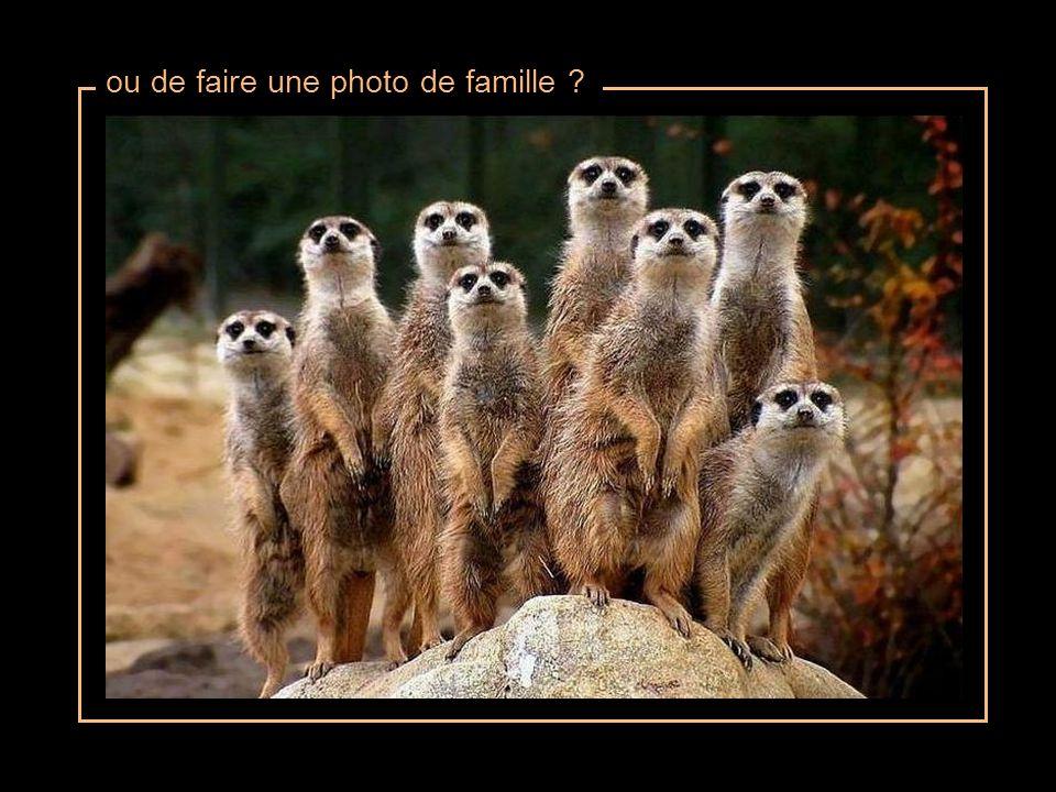 ou de faire une photo de famille ?