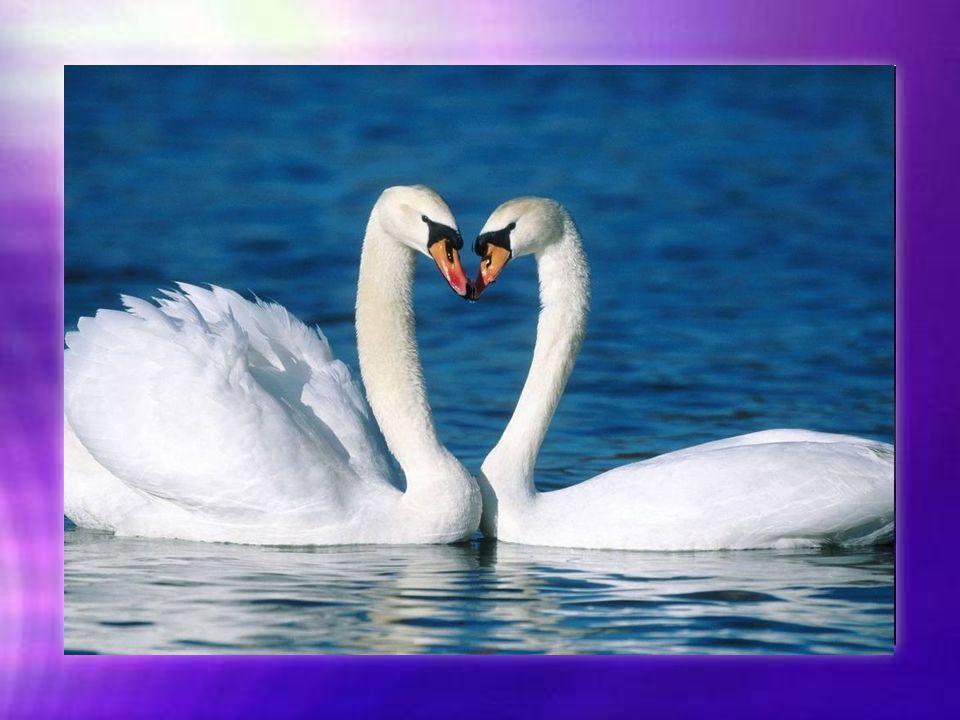 L amitié c est les profondeurs de l âme, remplies de magnifiques coraux qui ont mis parfois des centaines d années pour grandir et que des hommes cupides peuvent détruire en quelques heures...