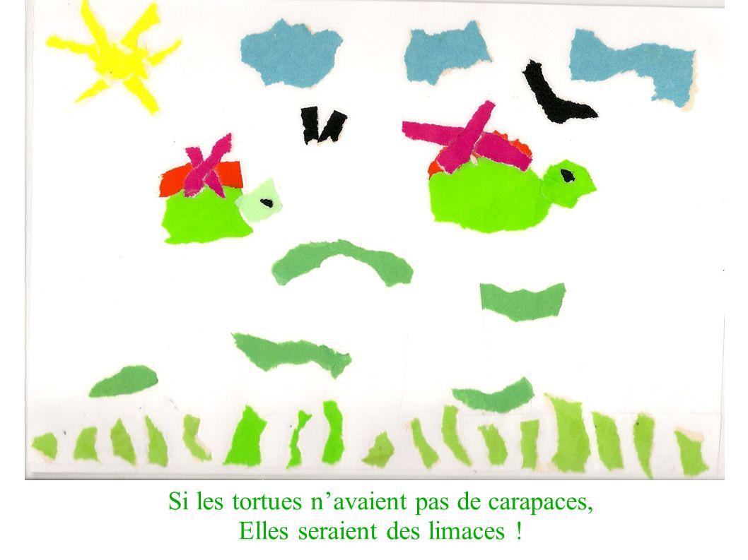 Si les tortues navaient pas de carapaces, Elles seraient des limaces !