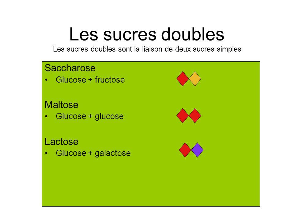 Les sucres doubles Les sucres doubles sont la liaison de deux sucres simples Saccharose Glucose + fructose Maltose Glucose + glucose Lactose Glucose + galactose