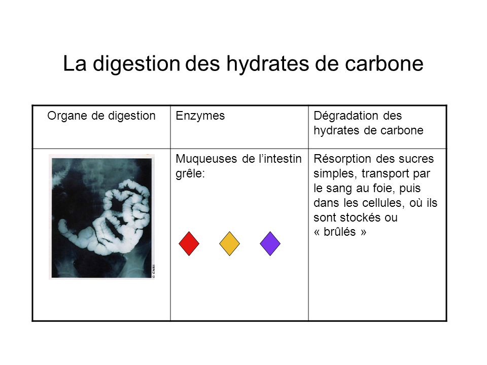 La digestion des hydrates de carbone Organe de digestionEnzymesDégradation des hydrates de carbone Muqueuses de lintestin grêle: Résorption des sucres simples, transport par le sang au foie, puis dans les cellules, où ils sont stockés ou « brûlés »