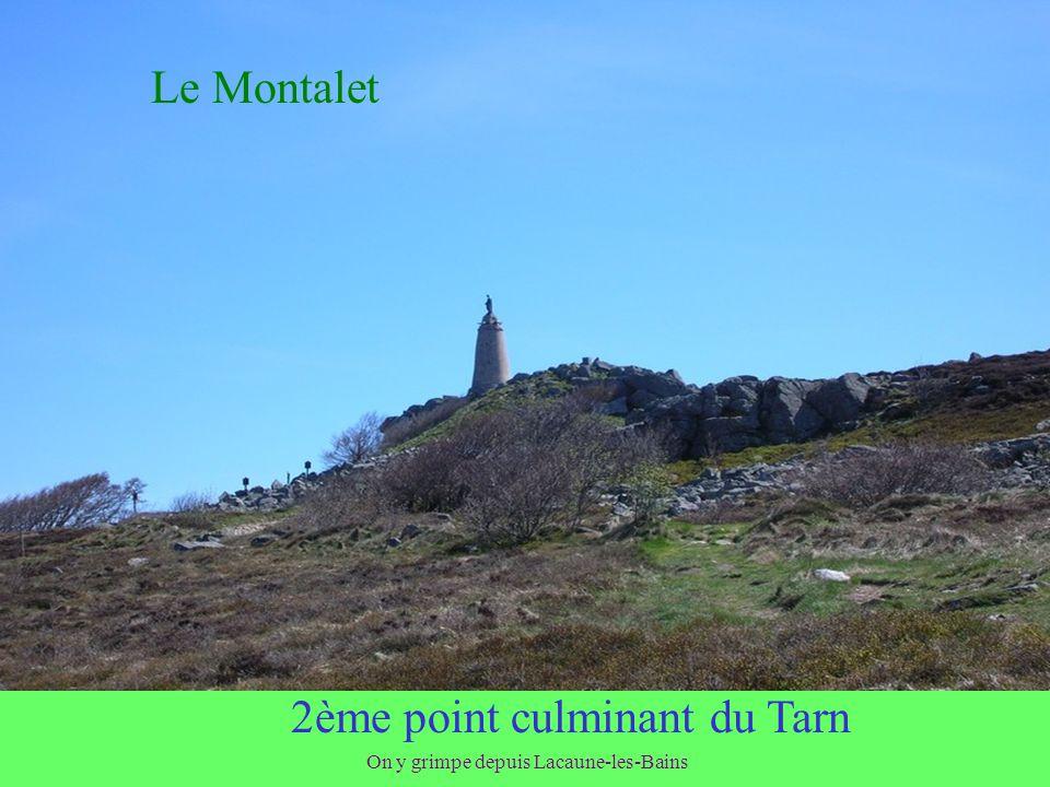 Et des pisseurs La « Fontaine des Pisseurs » de Lacaune les Bains serait, parait-il, un irréfutable témoin de la qualité « énergétique » de ses eaux.