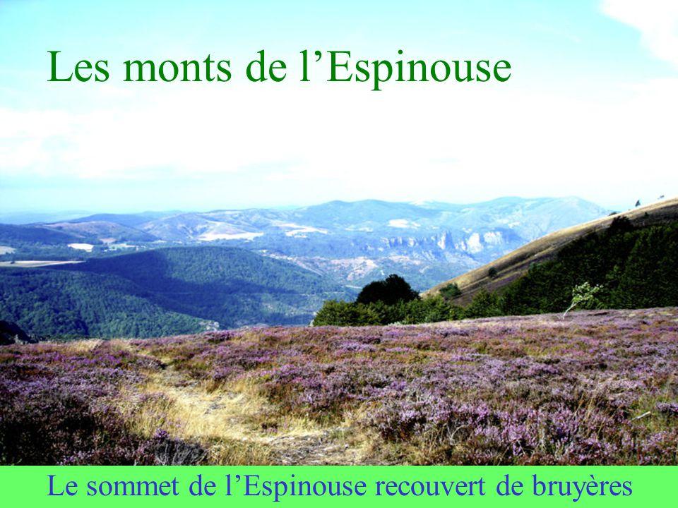 2ème point culminant du Tarn Le Montalet On y grimpe depuis Lacaune-les-Bains