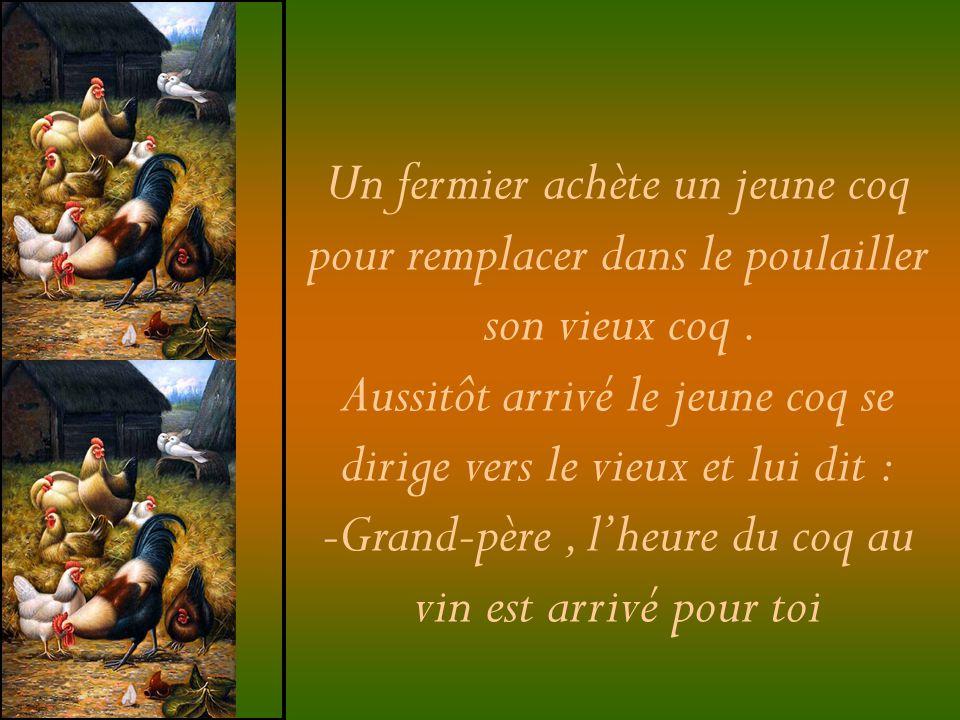 Un fermier achète un jeune coq pour remplacer dans le poulailler son vieux coq. Aussitôt arrivé le jeune coq se dirige vers le vieux et lui dit : -Gra