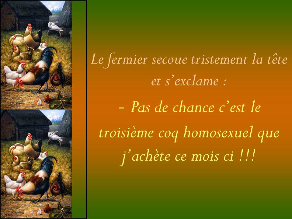 Le fermier secoue tristement la tête et sexclame : - Pas de chance cest le troisième coq homosexuel que jachète ce mois ci !!!