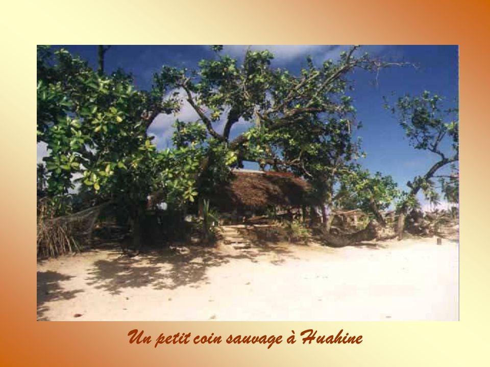 Un petit coin sauvage à Huahine