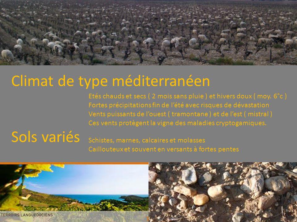 Climat de type méditerranéen Etés chauds et secs ( 2 mois sans pluie ) et hivers doux ( moy.