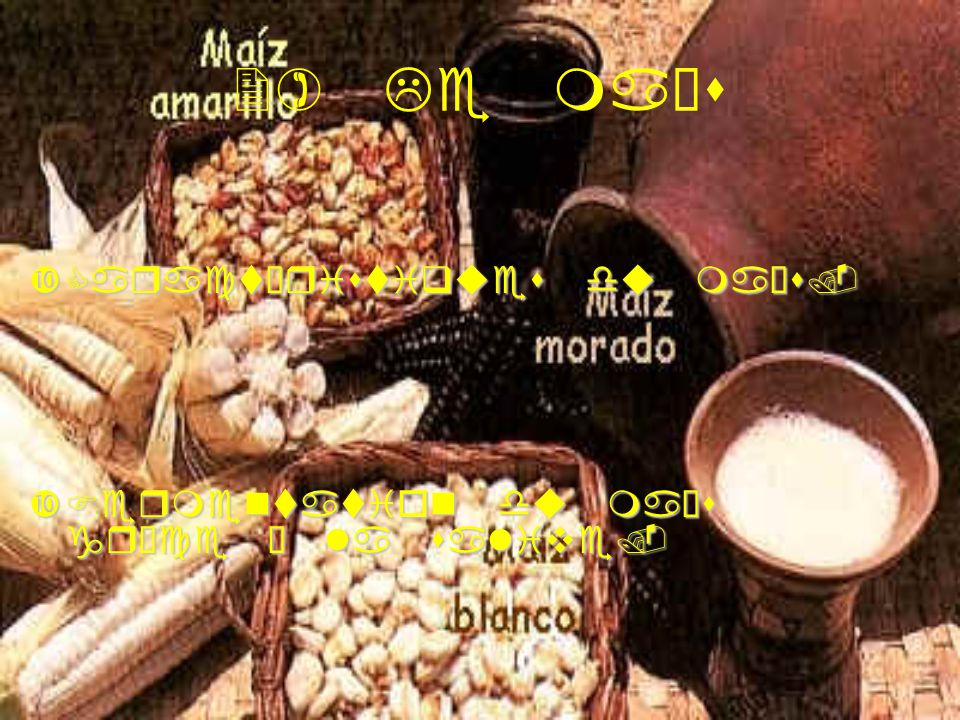 2) Le maïs Caractéristiques du maïs.Caractéristiques du maïs. Fermentation du maïs grâce à la salive.Fermentation du maïs grâce à la salive.