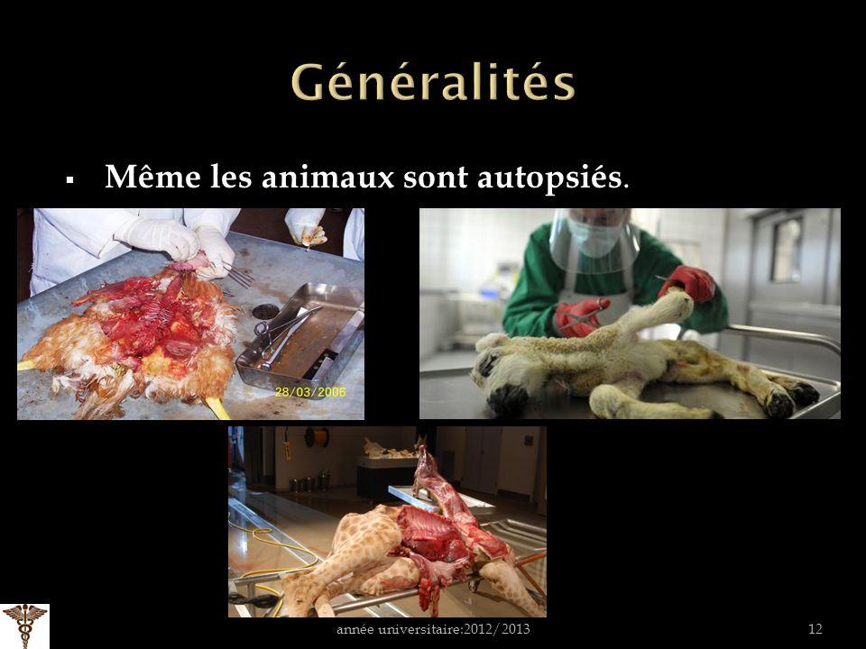 Même les animaux sont autopsiés. année universitaire:2012/201312