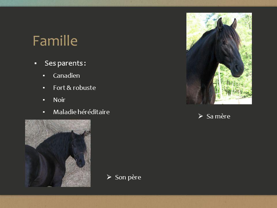 Famille (suite) Ses plusieurs frères et soeurs: Quarters Horse et Paint Horse