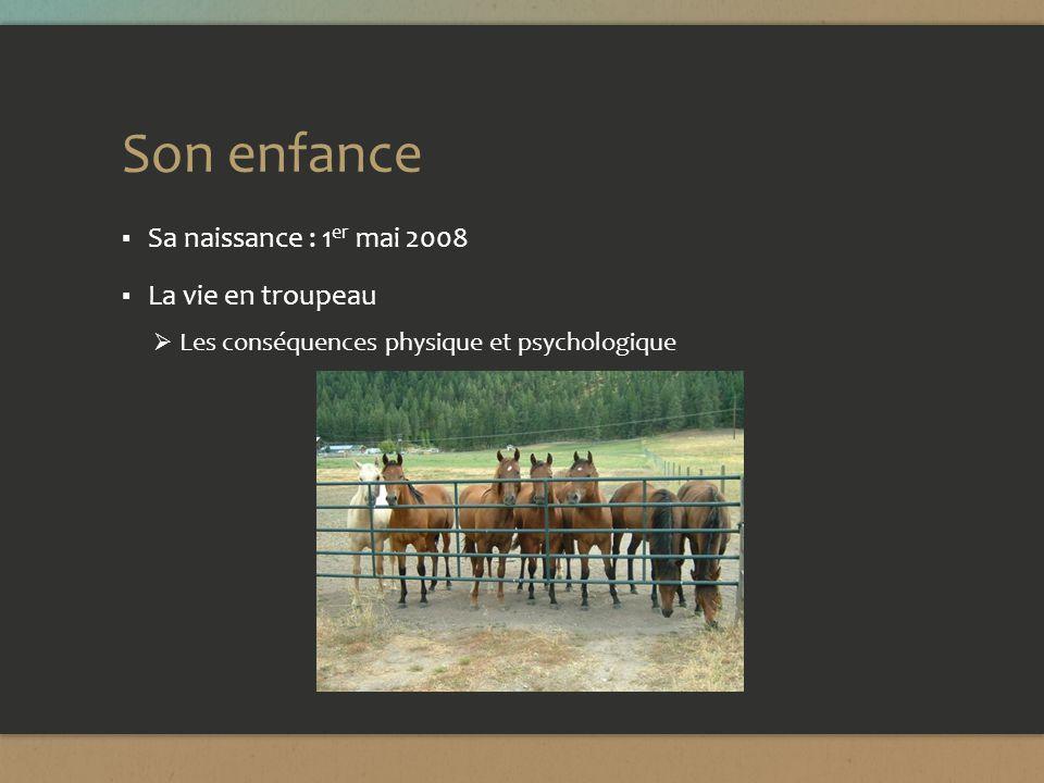 Son enfance Sa naissance : 1 er mai 2008 La vie en troupeau Les conséquences physique et psychologique