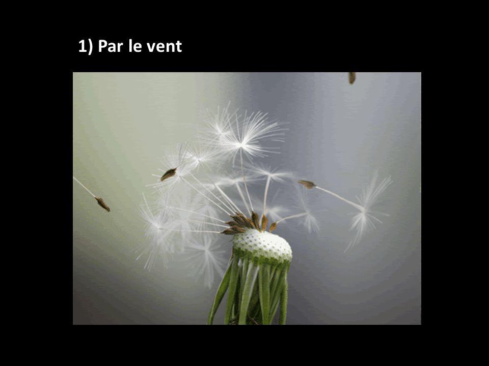 1) Par le vent