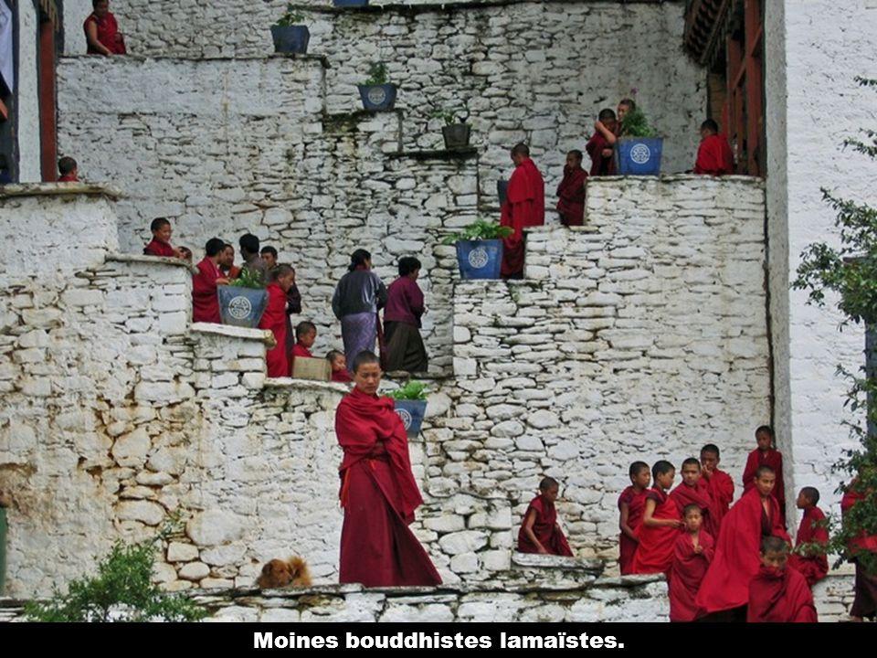 Les moinillons entrent au dzong entre lâge de 6 et 9 ans.