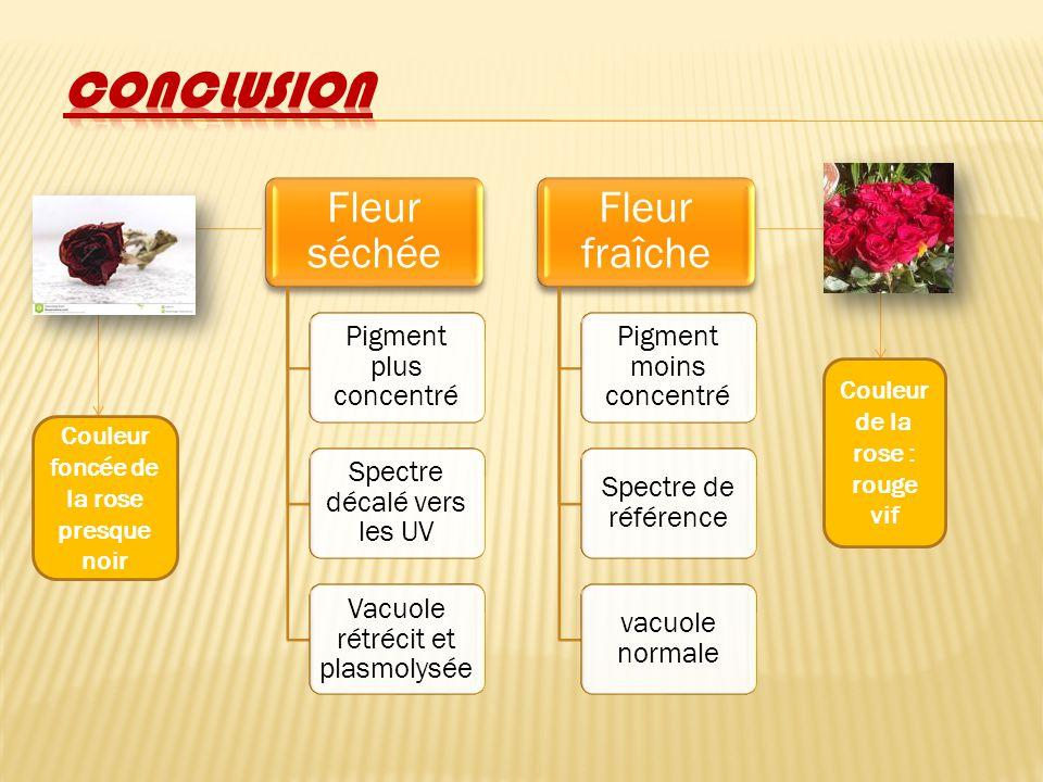 Fleur séchée Pigment plus concentré Spectre décalé vers les UV Vacuole rétrécit et plasmolysée Fleur fraîche Pigment moins concentré Spectre de référe