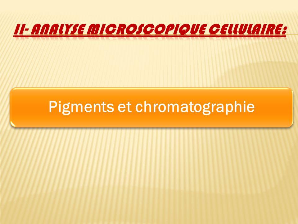 Pigments et chromatographie