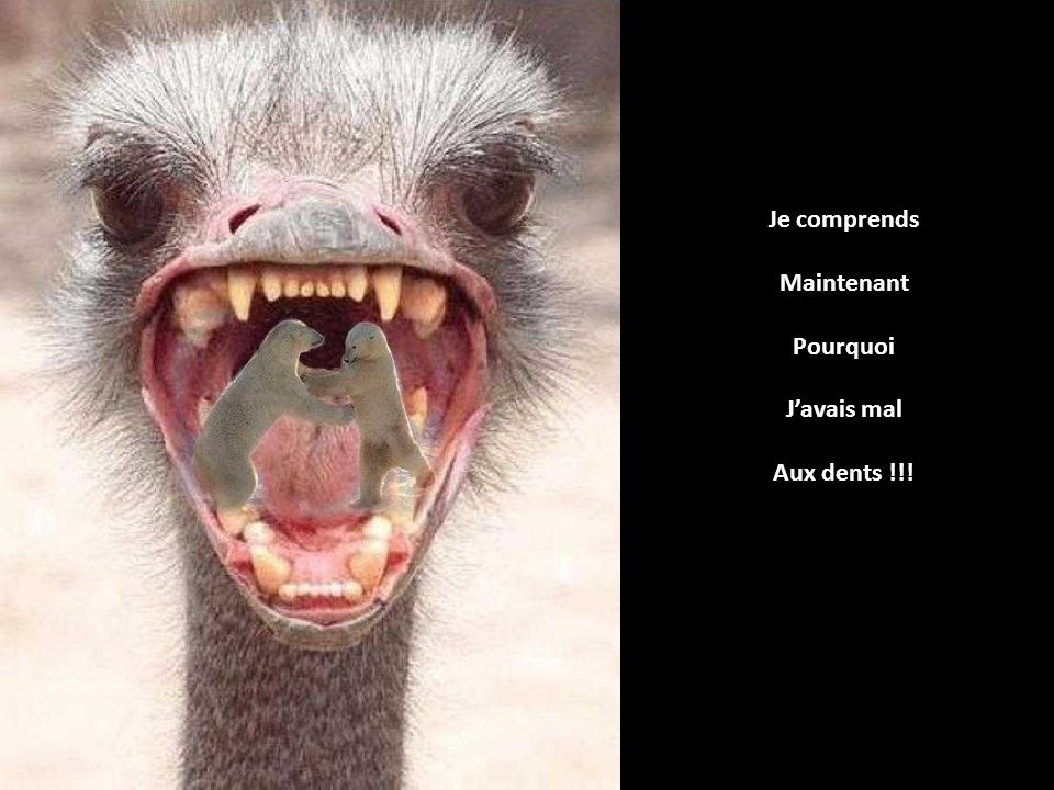 Je comprends Maintenant Pourquoi Javais mal Aux dents !!!