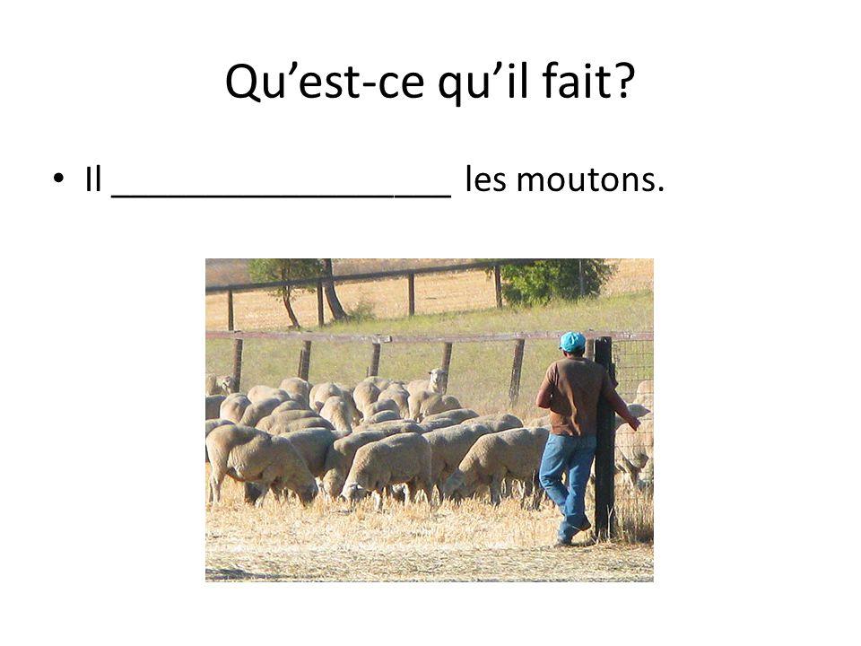 Quest-ce quil fait Il __________________ les moutons.