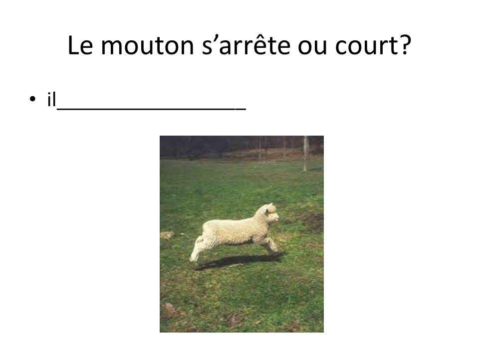 Le mouton sarrête ou court il__________________