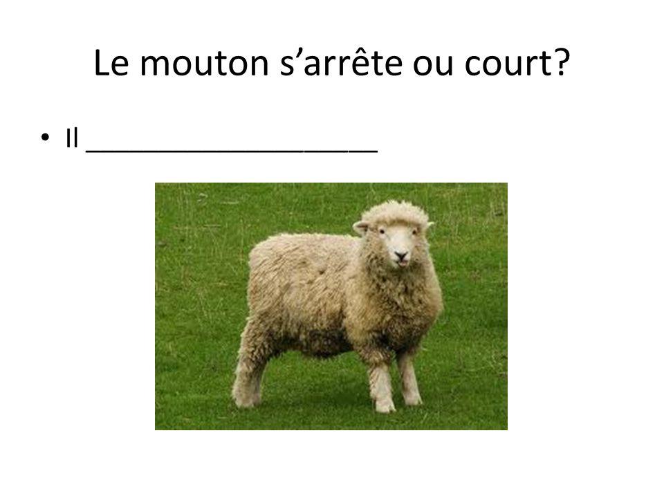 Le mouton sarrête ou court Il ____________________