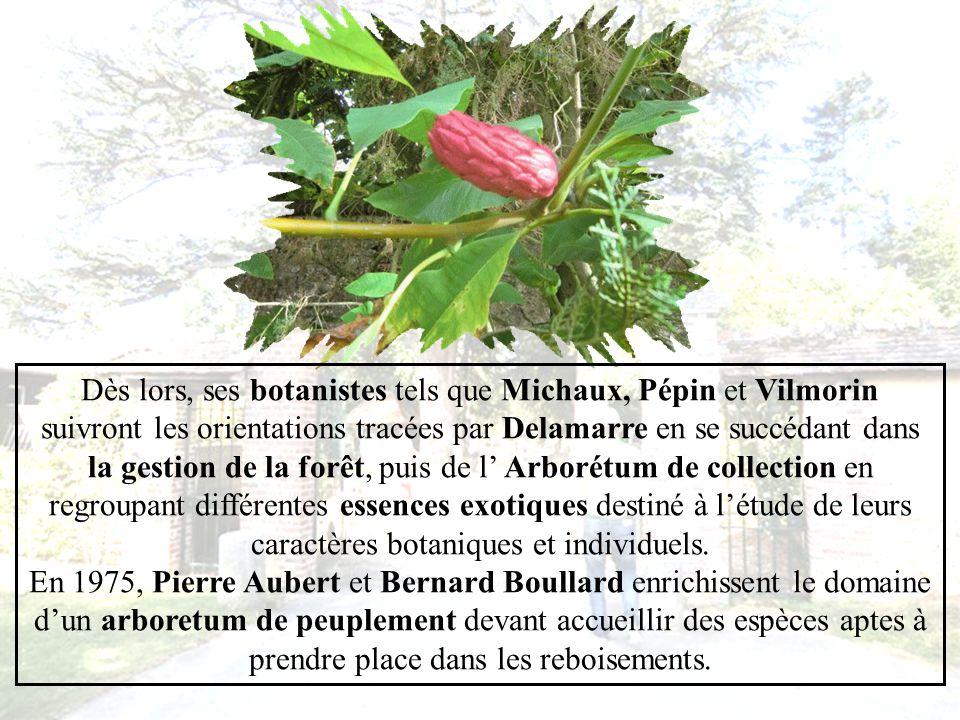 En 1802,Louis Gervais Delamarre, avocat parisien et arboriculteur d avant garde, rachète le château hypothéqué par les Harcourt afin dexploiter les terres affiliées et d expérimenter la culture de larbre.