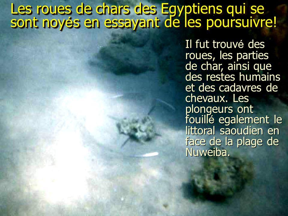 Les roues de chars des Egyptiens qui se sont noy é s en essayant de les poursuivre! Il fut trouvé des roues, les parties de char, ainsi que des restes