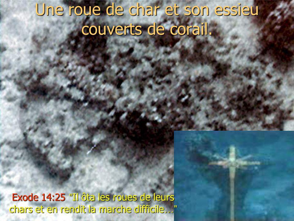 Une roue de char et son essieu couverts de corail. Exode 14:25 Il ôta les roues de leurs chars et en rendit la marche difficile …