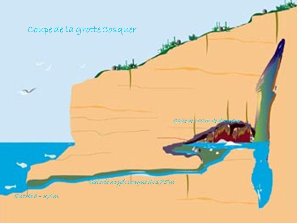 Entrée à – 37 m Galerie noyée longue de 175 m Salle de 100 m de diamètre Coupe de la grotte Cosquer