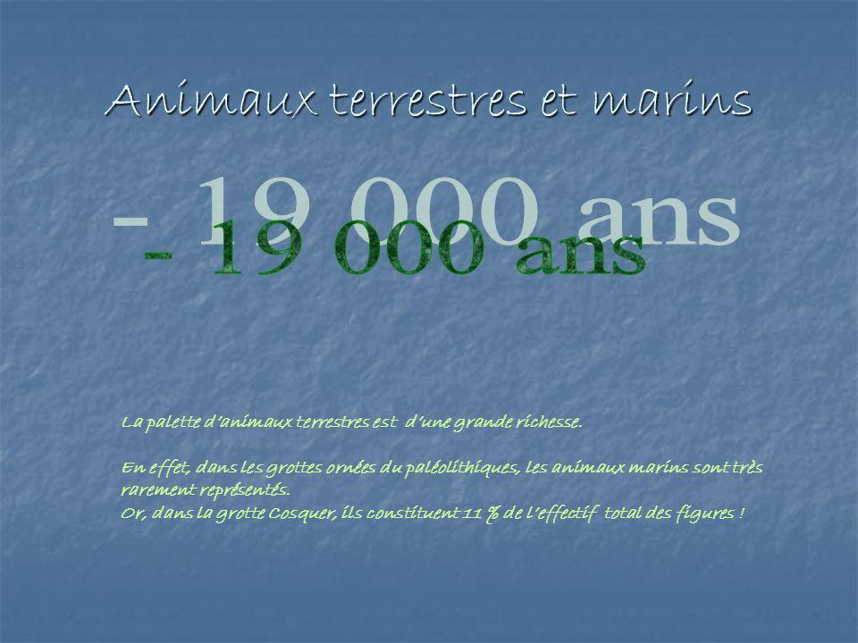 Animaux terrestres et marins La palette danimaux terrestres est dune grande richesse. En effet, dans les grottes ornées du paléolithiques, les animaux