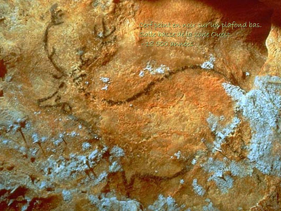 Cerf peint en noir sur un plafond bas. Salle basse de la zone Ouest. - 18 500 années - 18 500 années