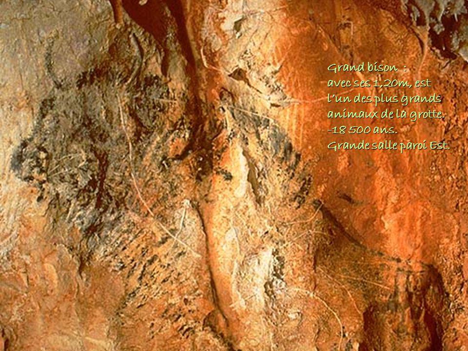 Grand bison : avec ses 1,20m, est lun des plus grands animaux de la grotte. -18 500 ans. Grande salle paroi Est.