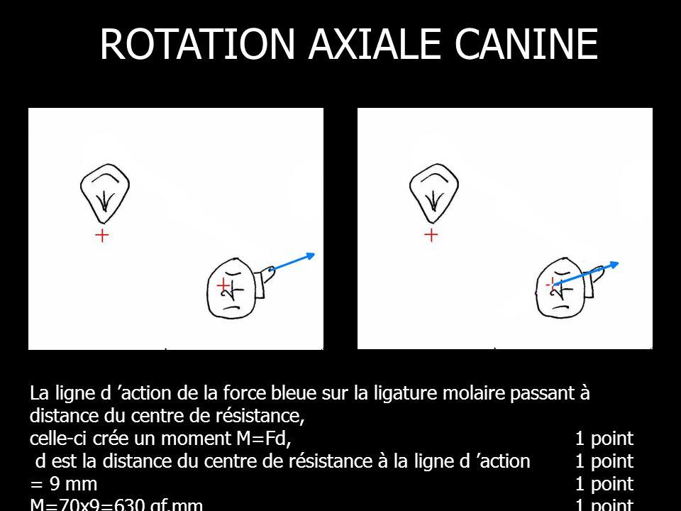 La ligne d action de la force bleue sur la ligature molaire passant à distance du centre de résistance, celle-ci crée un moment M=Fd,1 point d est la distance du centre de résistance à la ligne d action 1 point = 9 mm1 point M=70x9=630 gf.mm 1 point ROTATION AXIALE CANINE