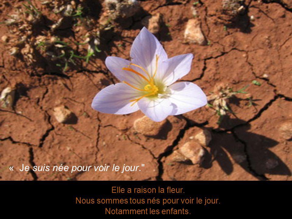 Elle a raison la fleur. Nous sommes tous nés pour voir le jour.