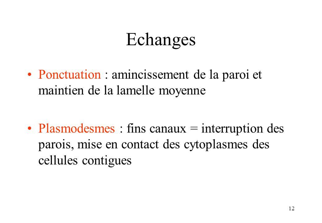 12 Echanges Ponctuation : amincissement de la paroi et maintien de la lamelle moyenne Plasmodesmes : fins canaux = interruption des parois, mise en contact des cytoplasmes des cellules contigues