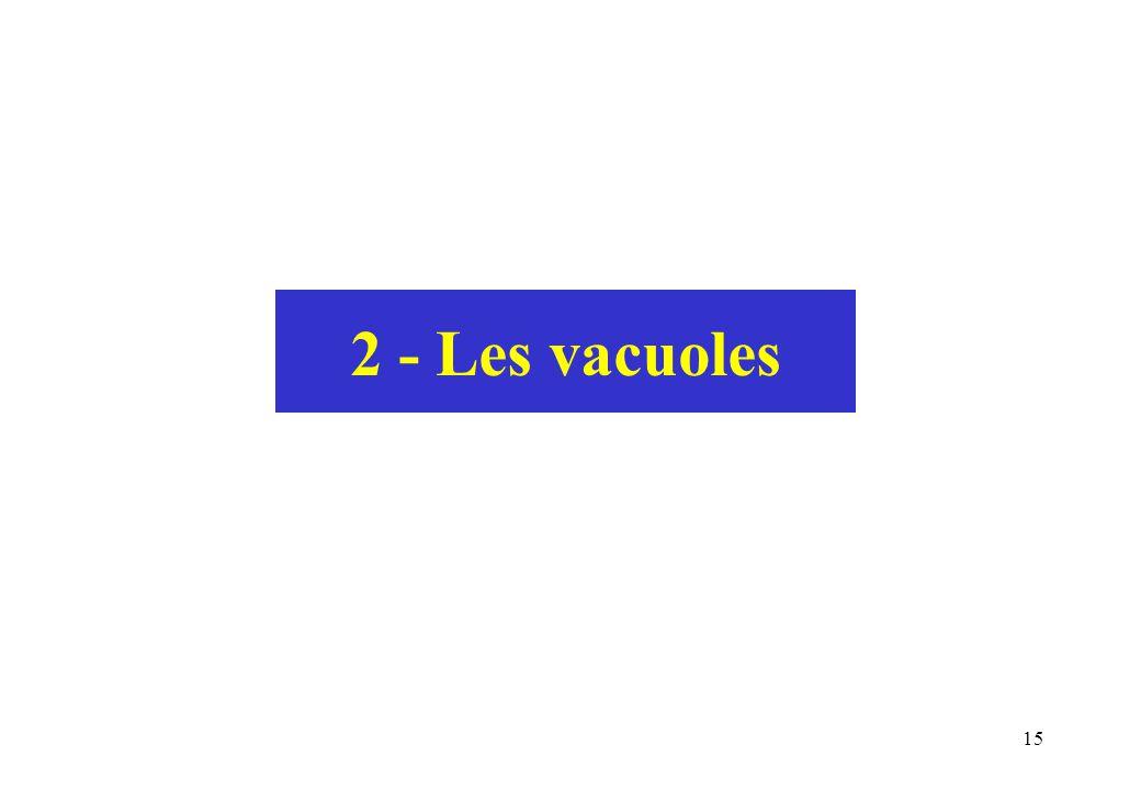 15 2 - Les vacuoles