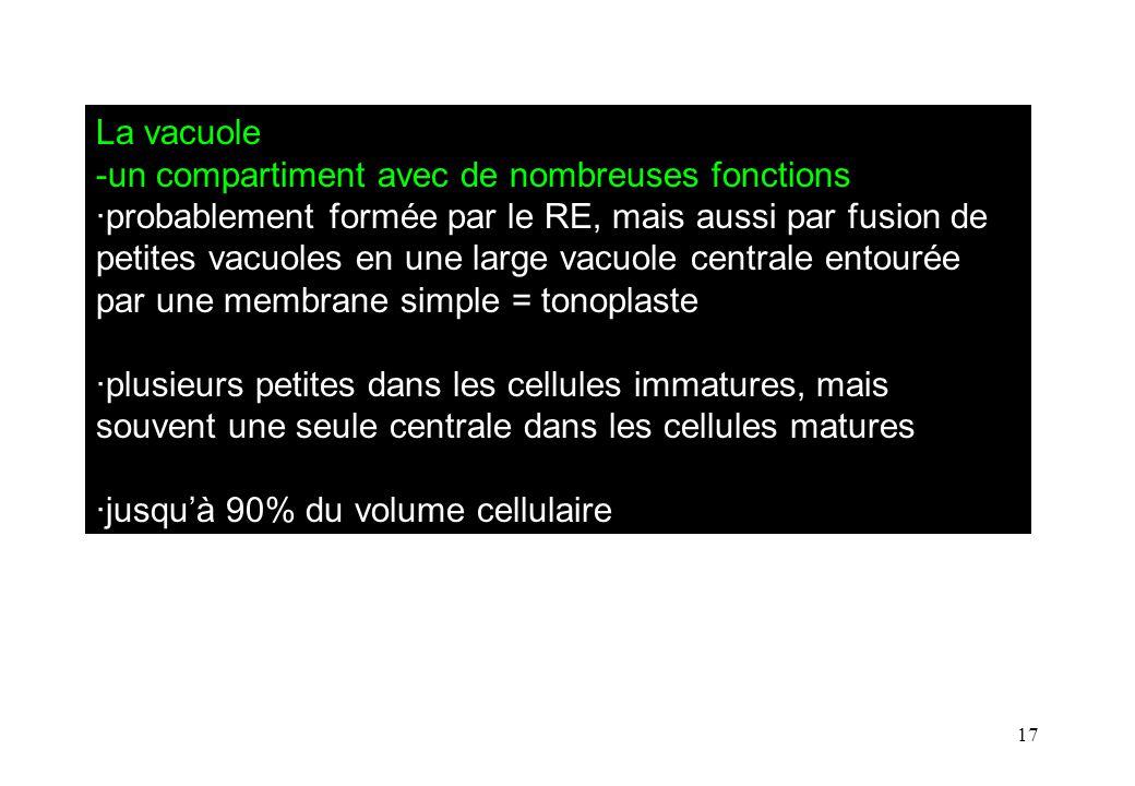 17 La vacuole -un compartiment avec de nombreuses fonctions ·probablement formée par le RE, mais aussi par fusion de petites vacuoles en une large vacuole centrale entourée par une membrane simple = tonoplaste ·plusieurs petites dans les cellules immatures, mais souvent une seule centrale dans les cellules matures ·jusquà 90% du volume cellulaire