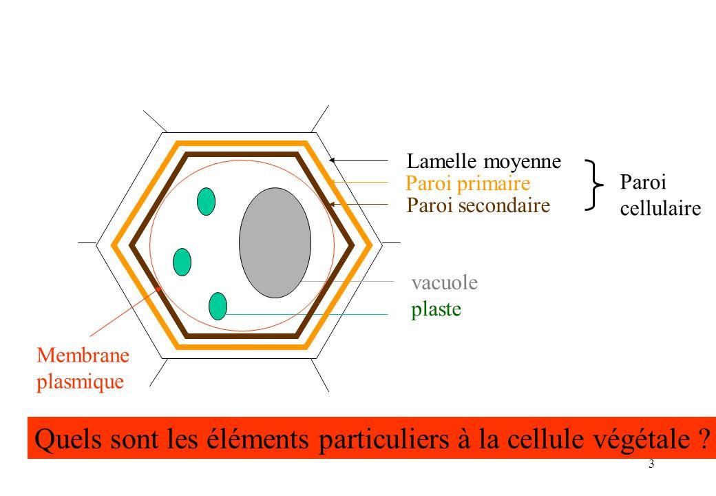3 Lamelle moyenne Paroi primaire Paroi secondaire Paroi cellulaire vacuole plaste Quels sont les éléments particuliers à la cellule végétale ? Membran