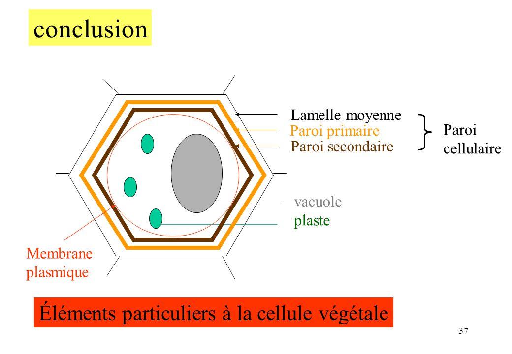 37 Lamelle moyenne Paroi primaire Paroi secondaire Paroi cellulaire vacuole plaste Éléments particuliers à la cellule végétale conclusion Membrane pla