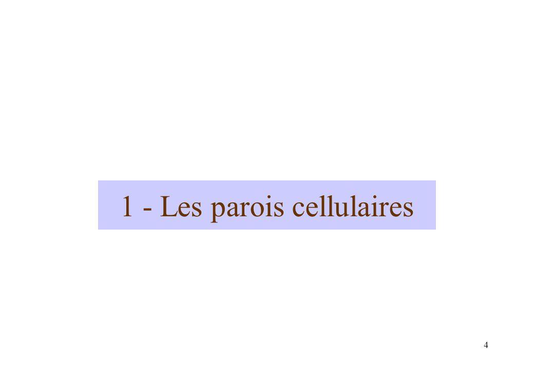4 1 - Les parois cellulaires