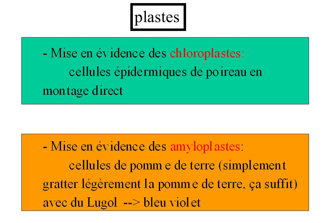 41 plastes