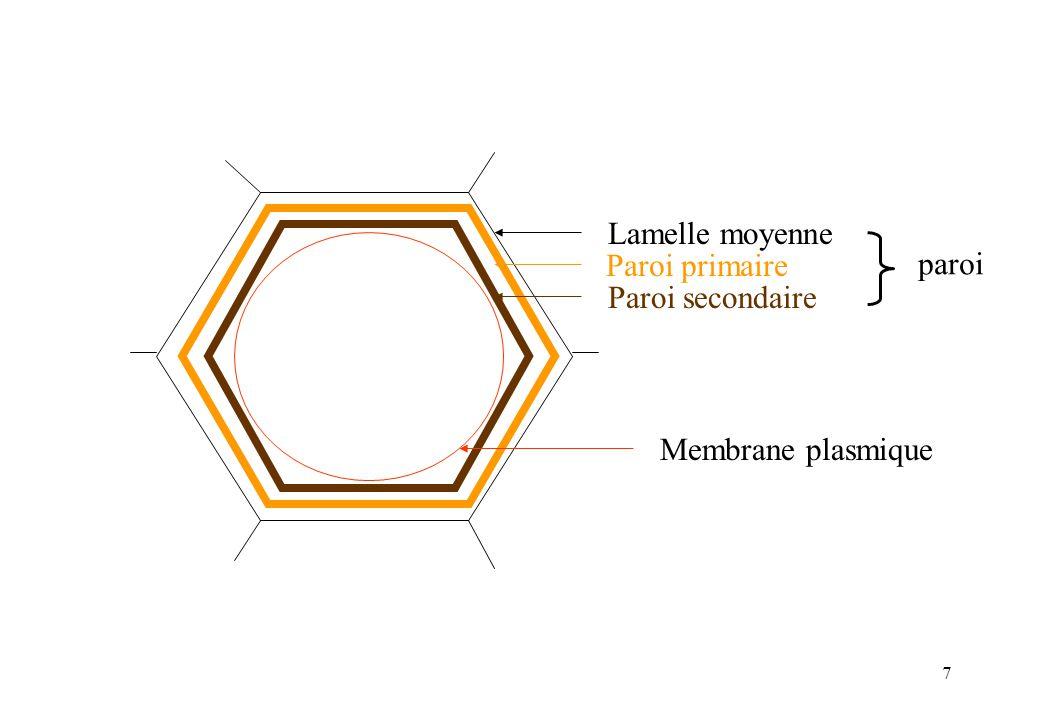 7 Lamelle moyenne Paroi primaire Paroi secondaire paroi Membrane plasmique