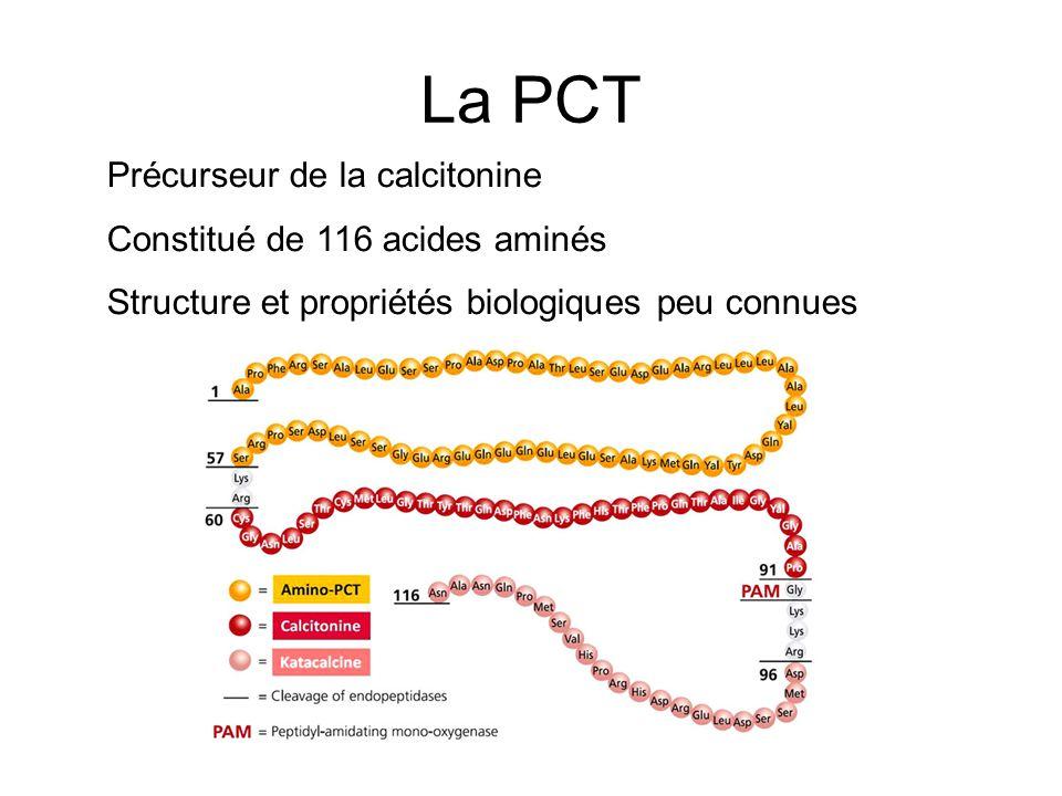 La PCT Précurseur de la calcitonine Constitué de 116 acides aminés Structure et propriétés biologiques peu connues