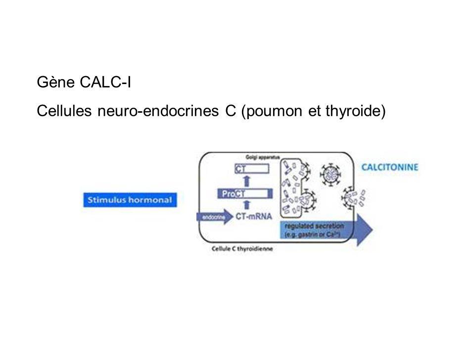 Gène CALC-I expression ubiquitaire lors des infections bactériennes -Action directe des toxines -Action médiée par les cytokines inflammatoires libérées par les cellules hotes Marqueur sensible et spécifique des infections bactériennes