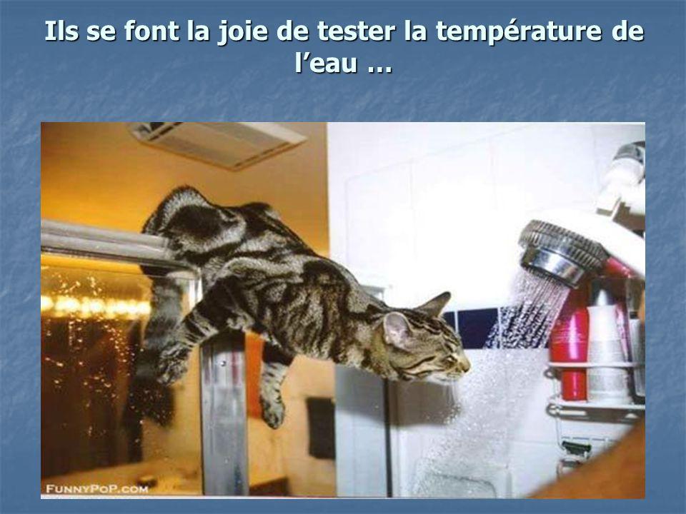 Ils se font la joie de tester la température de leau …