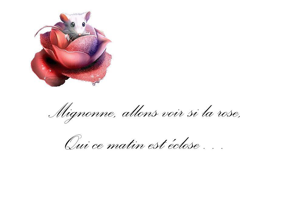 Mignonne, allons voir si la rose, Qui ce matin est éclose…